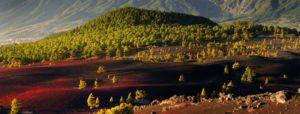 La Reserva de la Biosfera de La Palma adjudica el contrato de limpieza a una empresa de inserción